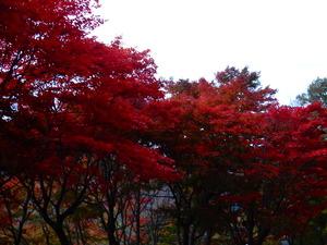 大曲の紅葉