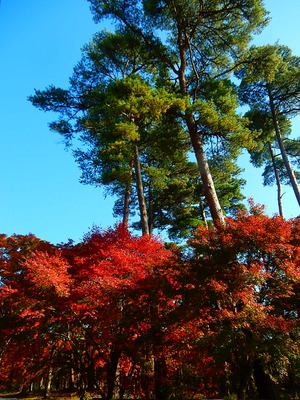 千本松牧場の紅葉2016.11.13
