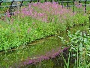 晩夏の上三依水生植物園