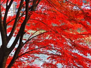 紅の吊橋2017.11.8