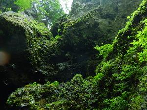 ユキワリソウ咲く岩