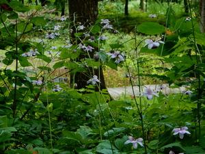 初秋の上三依水生植物園