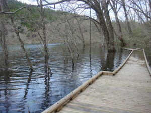 水没した大沼の木道