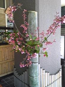 温泉街に桜の花