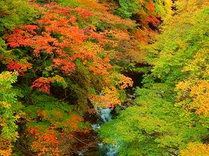 おかねみち橋付近の紅葉