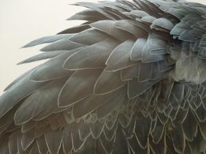羽の美しさ