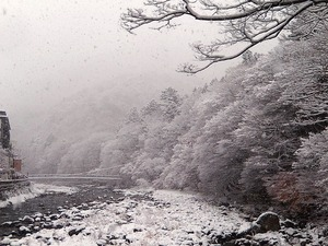 11/24の雪景色