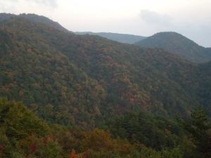 山全体に紅葉