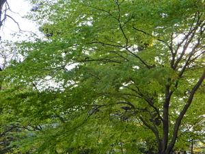 木々の芽吹き