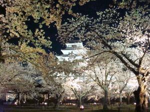 会津鶴ケ城の夜桜