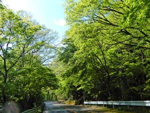 旧道の新緑