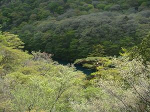 若葉と渓谷