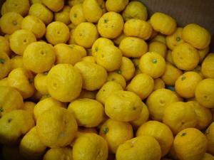 種無し柚子