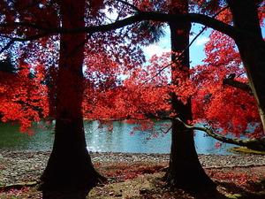 平泉毛越寺紅葉真っ盛り