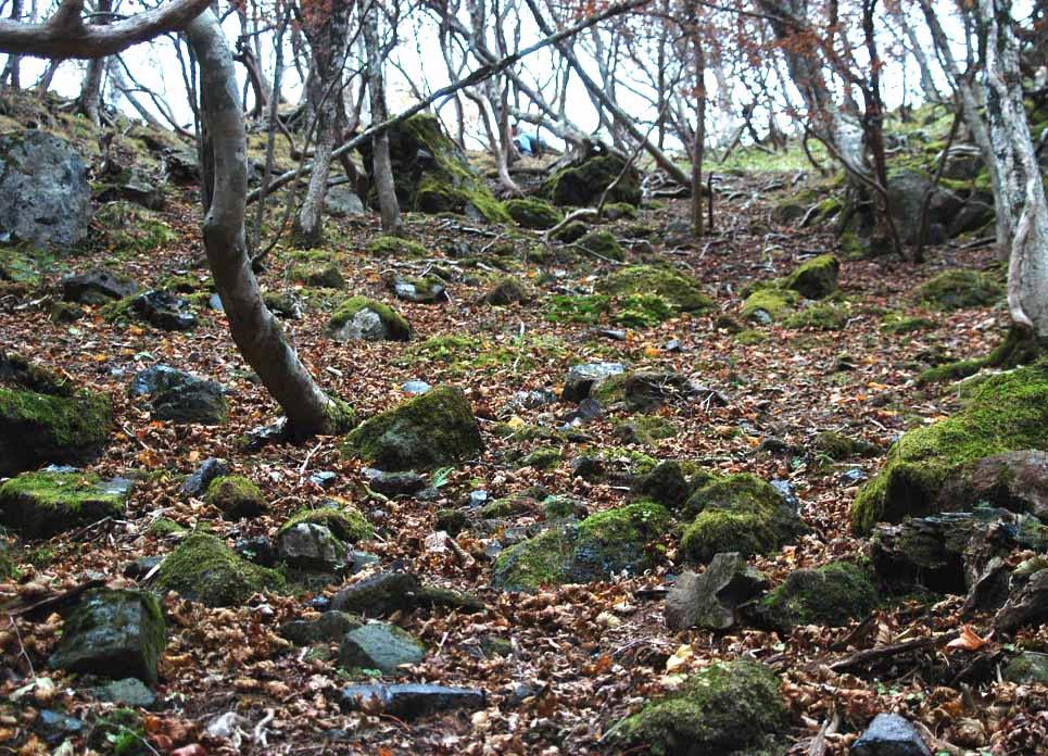 高原山黒曜石遺跡