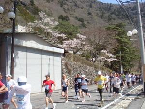 満開の桜の下湯けむりマラソン