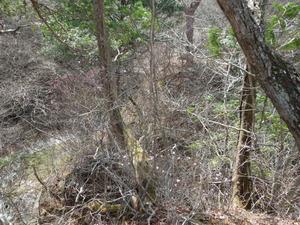ヤシオツツジやツツジの林を抜けて