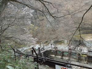 山桜が何本か