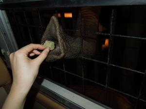 ゾウの鼻がバスの中に!