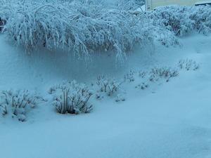 2/15の雪
