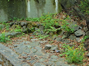 新緑の竜化の滝