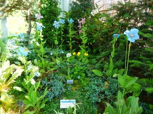 真岡市井頭公園の花ちょう遊館