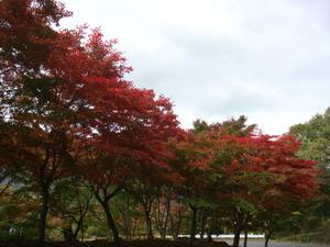 日塩もみじラインの紅葉