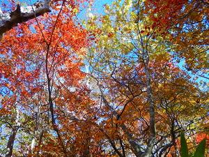 美しい紅葉の林