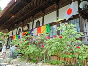 牡丹の花が咲き始めた妙雲寺