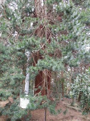 巨木もいっぱい