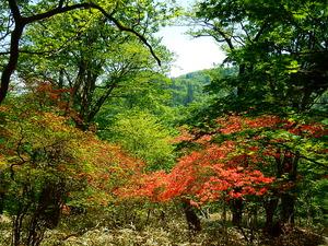 ミツモチ山2016.5.23