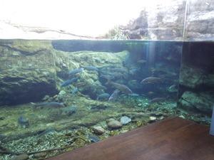 那珂川の生き物たち