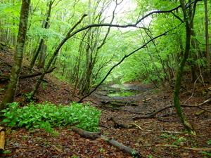 沼周辺の森