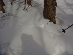 野ウサギの足跡