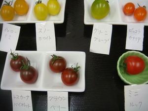 カラフルミニトマト色々