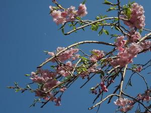 桜と三日月