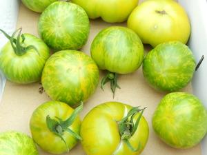 黄色いトマトも