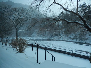 3/1の朝の雪