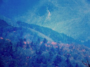 ヤシオツツジの山