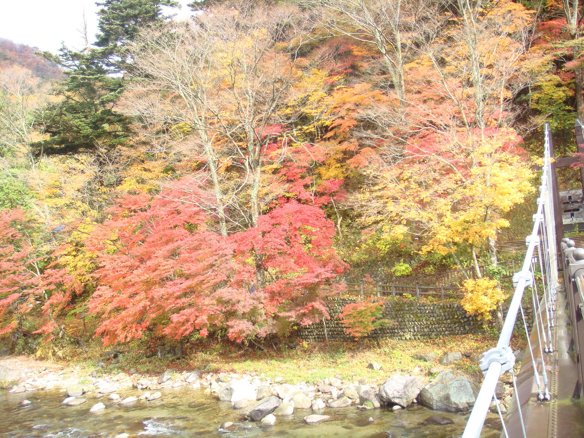もの語り館前の紅葉(つり橋左側)