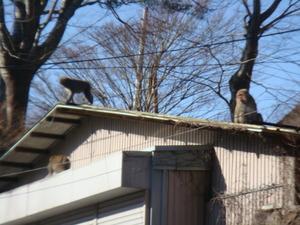 屋根の上にも