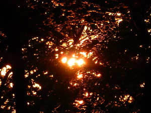 夕暮れの森