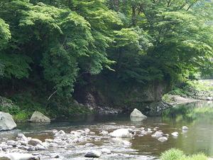 イワギボウシ咲く渓流