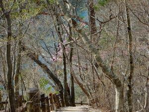 回顧(みかえり)の吊橋2017.4.16