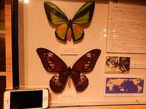 栃木県県民の森昆虫館