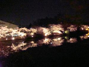 お堀に写る夜桜