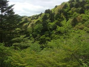 全ての木々が異なる色で
