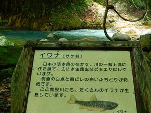 清流に棲む魚たち