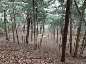自然のキャンプ場のような場所