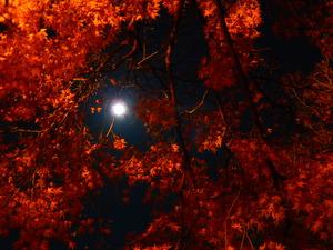満月とモミジと